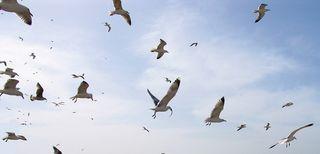 Oiseaux_en_vol