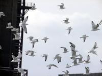 Oiseau_vol_libert