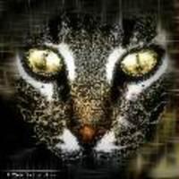 Animal_metis_gypte